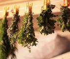 сушка лекарственной травы