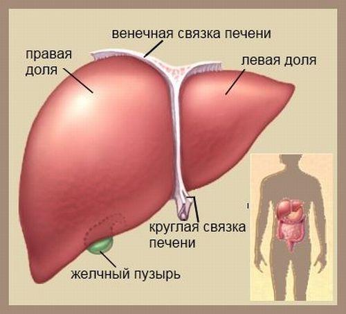 Дисплазия желчного пузыря