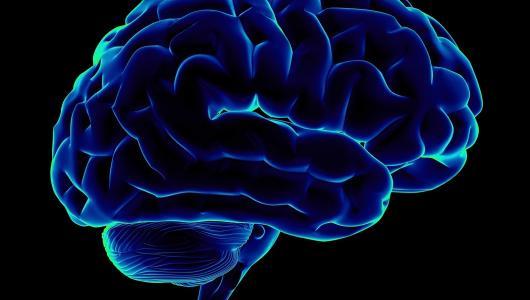 Фото 3 - Головной мозг
