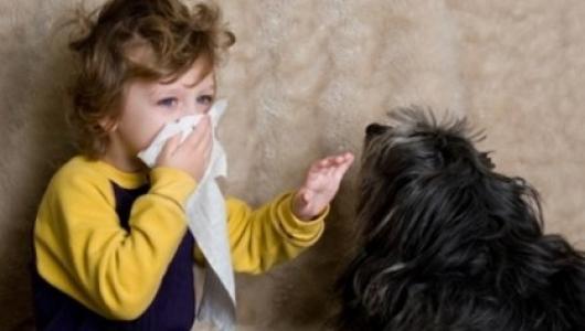 аллергия а животных