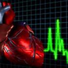 сердцебиение человека