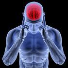 Фото 2 - Головной мозг