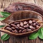Какао боб